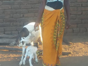 Goats program in Tengani, Malawi